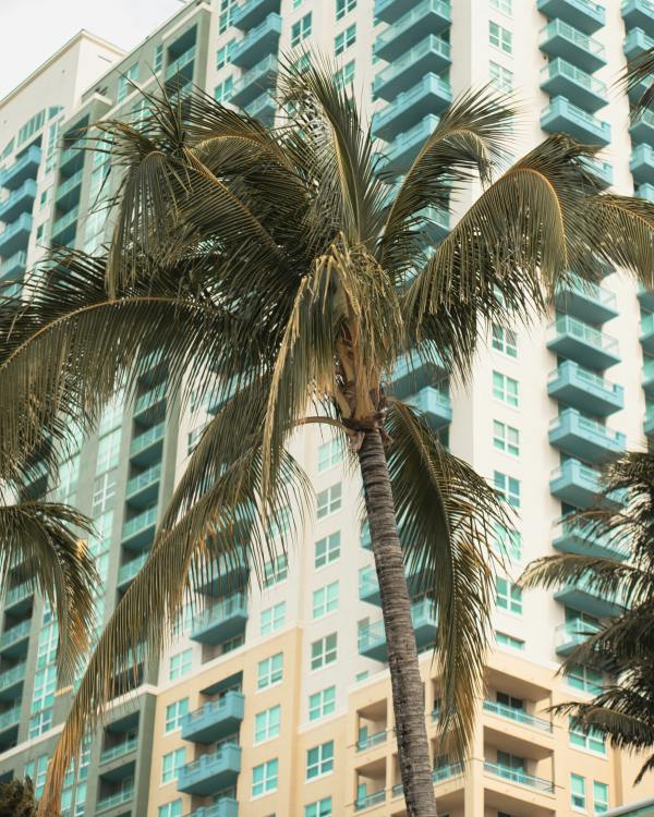 palm tree foreground; hi-rise backgrond